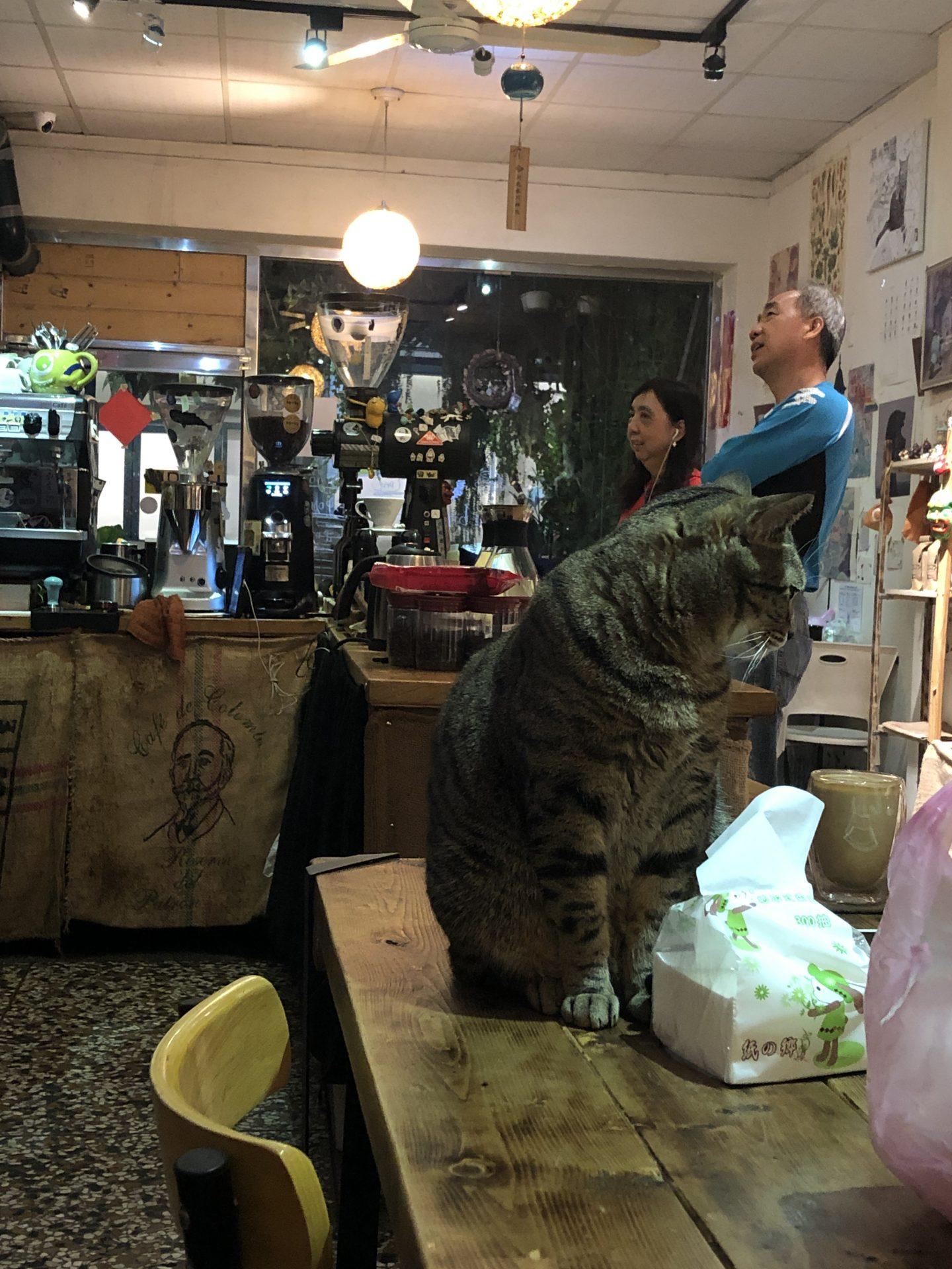coffee-house-huwei-cat