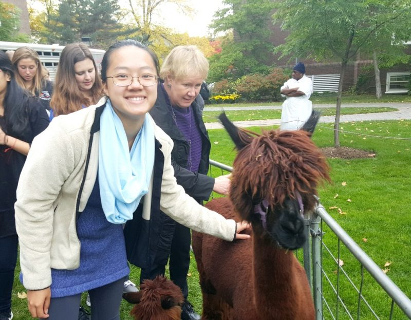 Rabbits, Chickens, and a Selfie with an Alpaca?